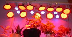 LED Grow Lights - Hydropnics