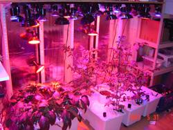 LED Grow Lights - Grow From Home