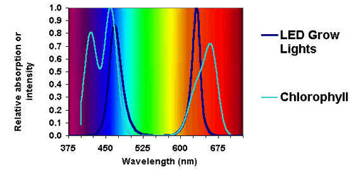 Why LEDs Make Better Plant Lights | LED Grow Lights ...